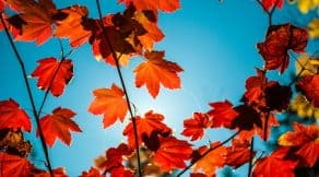 Orange leaves reflect the colours of fall 2018, which complements hair